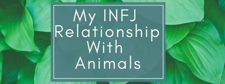My INFJ Relationship With Animals